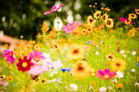 scattering ashes with wildflowers