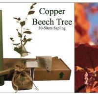 Cooper Beech Memorial Tree