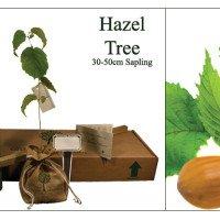 Hazel Memorial Tree