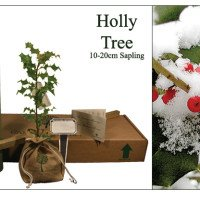 Holly Memorial Tree