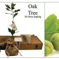 Oak Memorial Tree
