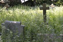poorly kept churchyard
